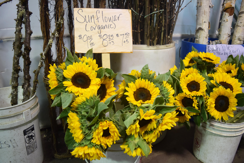 edited-sunflowers