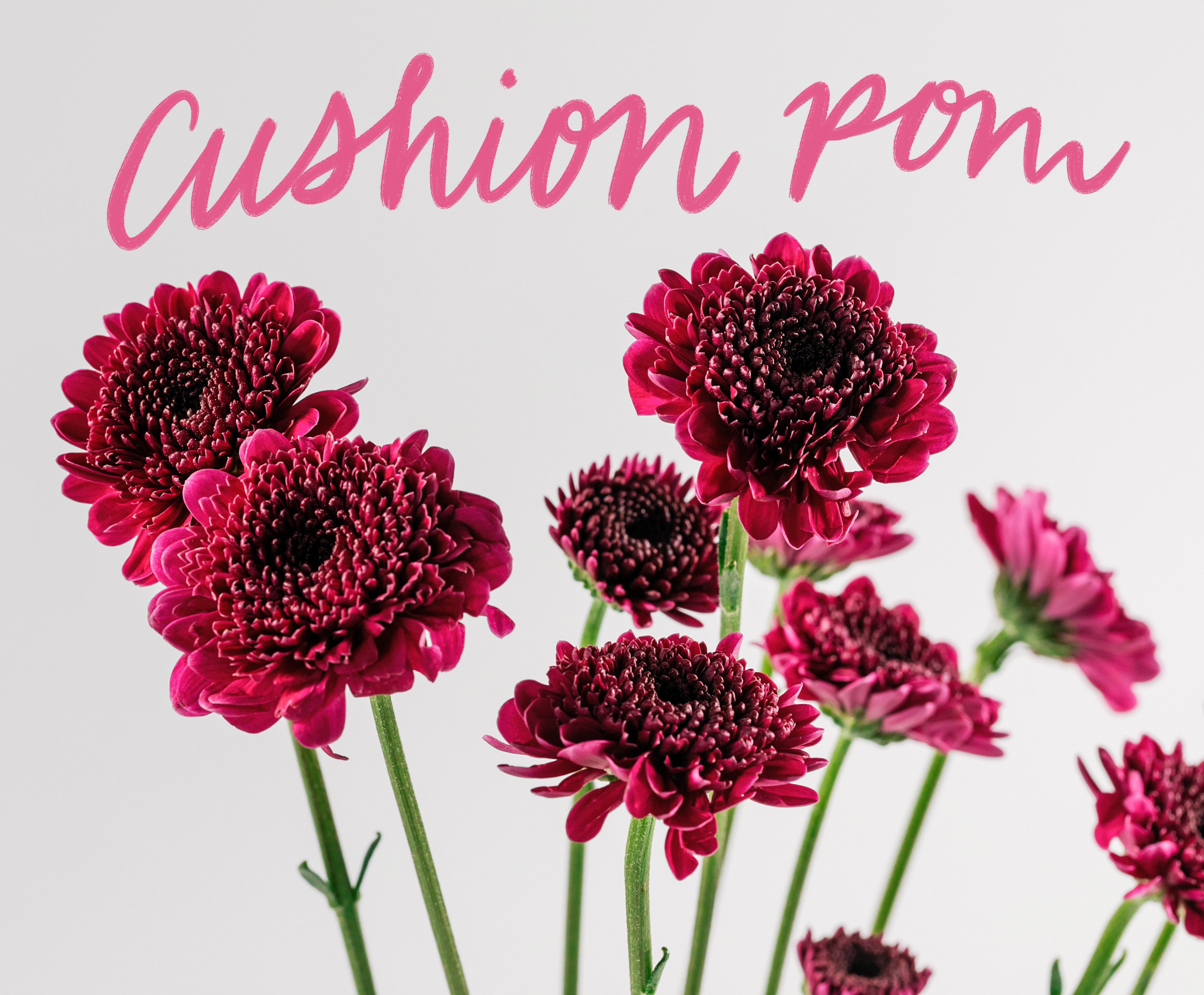 Cushion pom california state floral association cushion pom mightylinksfo